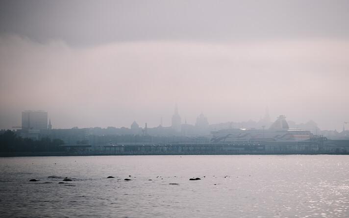 Läbi udu paistab mingi linn. See võib olla Holland.