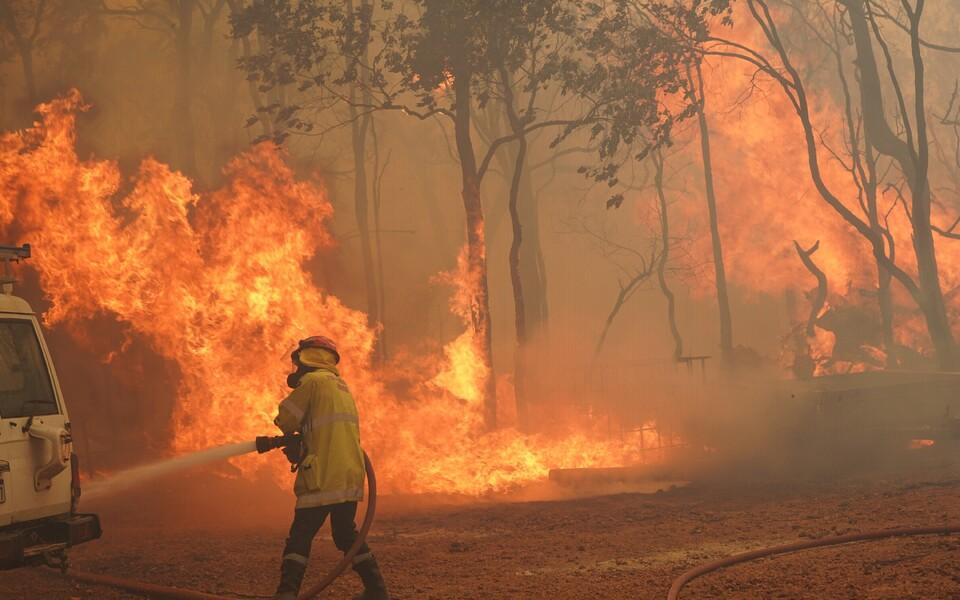 Austraaliat on vaevanud viimastel aastatel ulatuslikud metsatulekahjud.