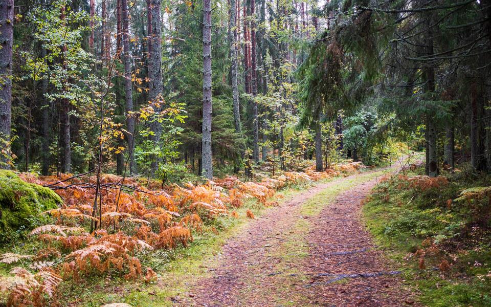 Осень. Лес.