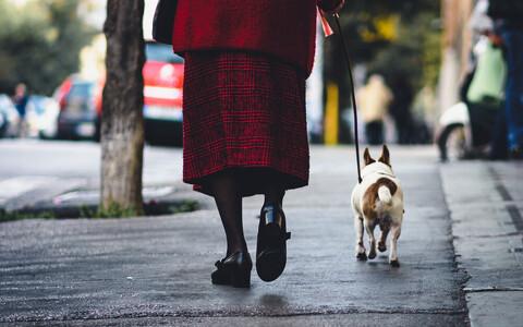 Jalutuskäik koeraga.
